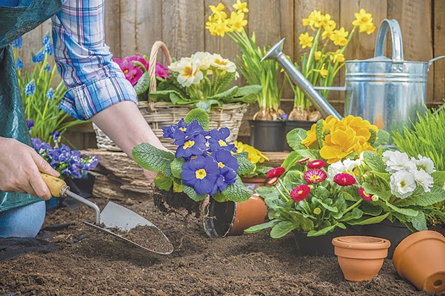 Most Productive  Things You Should Do During Lock-down. Prepare a home garden in our available space at home by planting various herbs and flower saplings.
