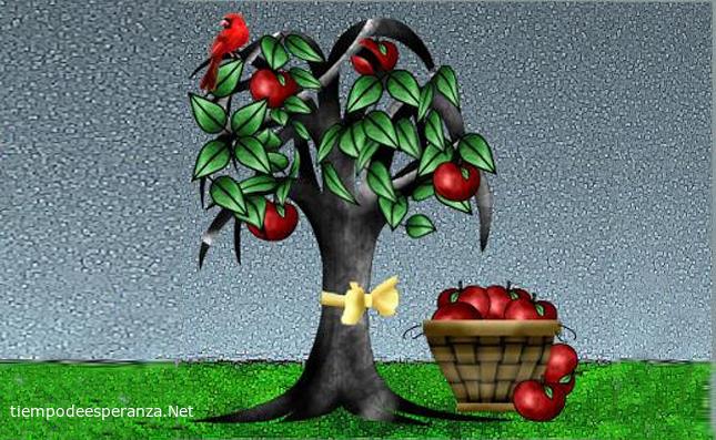 Reflexión sobre el árbol de manzanas