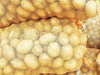 Waring Sayur Cocok Sebagai Pengemasan Hasil Panen Berkualitas