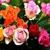 Inilah Info Lengkap Tentang Bunga Mawar dengan Karakter dan Filosofinya, Karena Bunga Bisa Mewakili Kata-kata