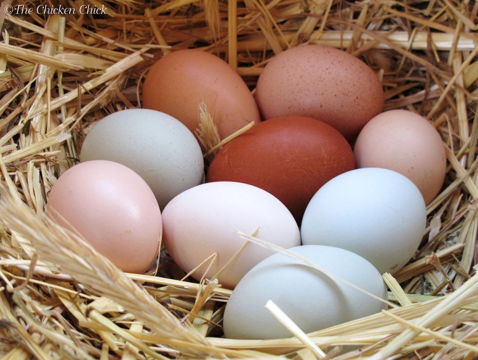 Where Did Come Brown Egg