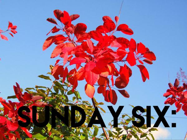 Sunday Six #7   Lifestyle