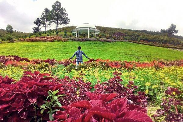kebun bunga sapo juma