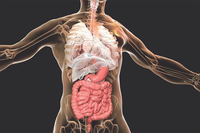 Tıpta Disseksiyon ne demektir? Kısaca