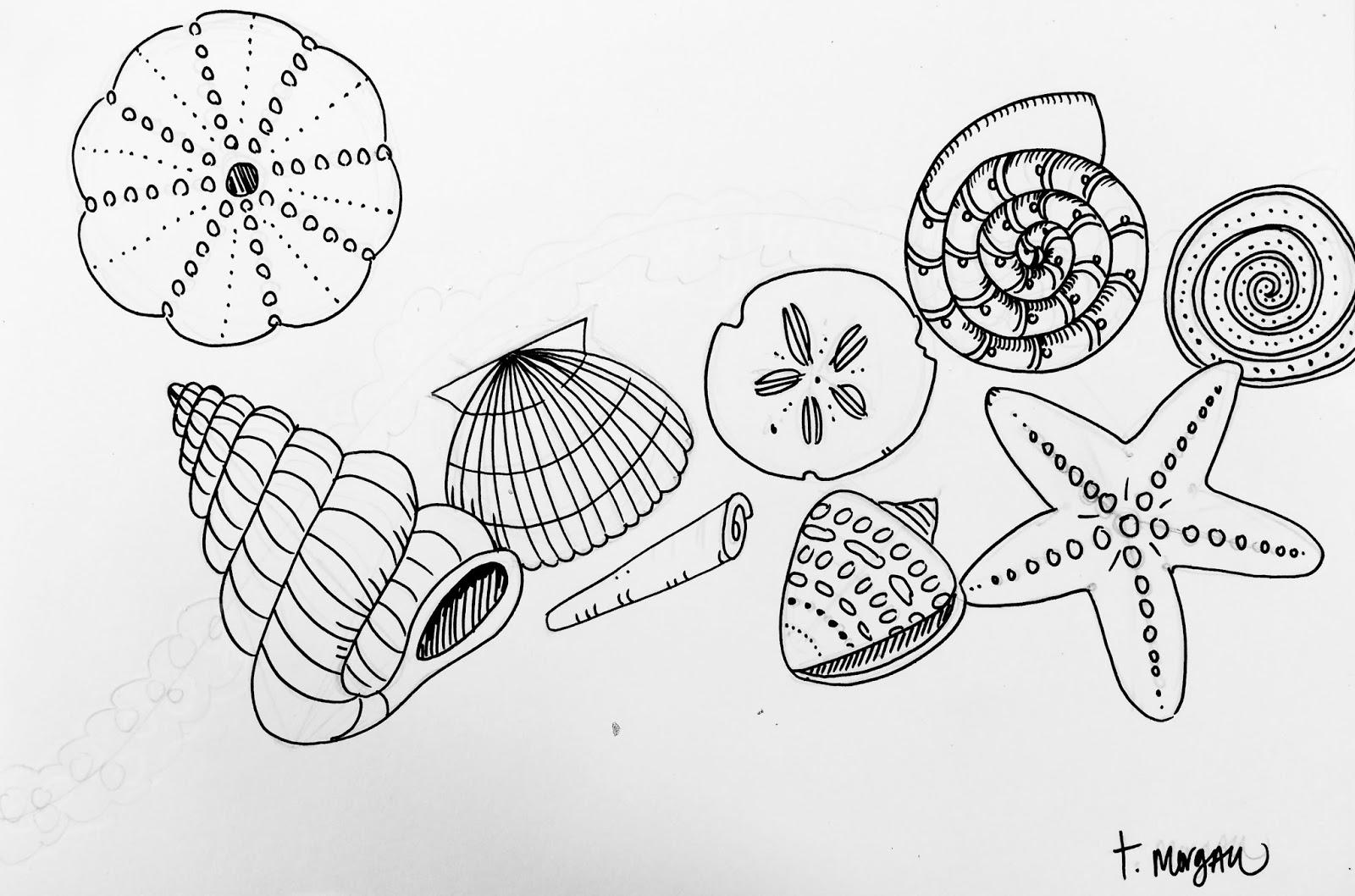 The Lost Sock Seashells By The Seashore