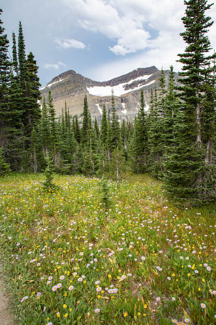 Mount Siyeh and wildflowers along Piegan Pass Trail