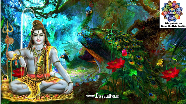 shiva photos mobile phone, shiva shakti pictures smartphones, desktop wallpapers hindu god lord shiva wallpaper backgground