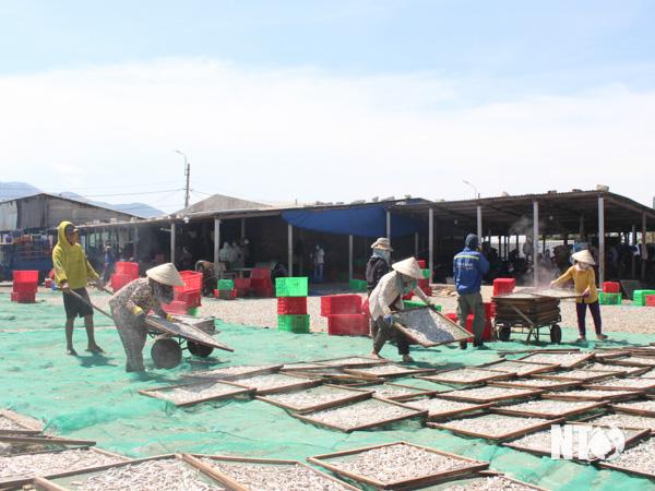 Thuận Nam: Các lò hấp cá giải quyết việc làm cho nhiều lao động trong mùa dịch Covid-19