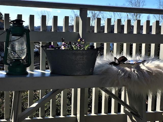 Stilleben med vårblomster på hytta - mot utsikten