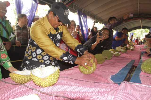 Si Bamban Pemenang Kontes Durian Biih 2018