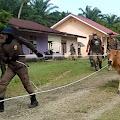 Pol PP Kembali Menangkap 19 Ekor Hewan Ternak Yang Berkeliaran Bebas