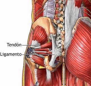 que son los ligamentos y tendones