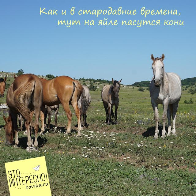 Долгоруковская яйла, Крым, Золотое Ярмо