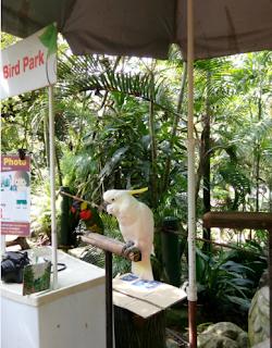 bird in bird park