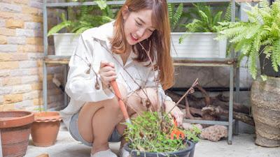 Yuk, Manfaatkan Halaman Rumah Dengan Membuat Mini Garden