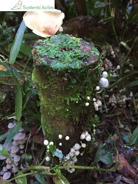 Cogumelos no Morro do Sapo