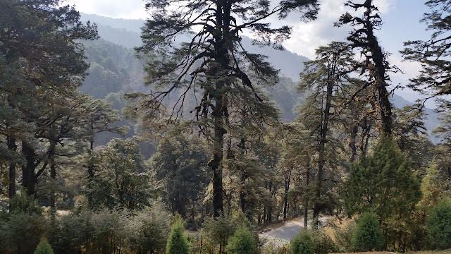 Royal Botanical Park