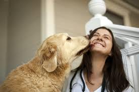 cão lambendo o dono