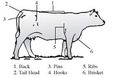 Body condition scoring in dairy cows