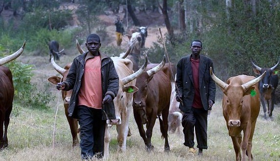 SEE WHAT POLICE SAID ABOUT RECENT FULANI  HERDSMEN ATTACK IN ENUGU – (FULL DETAILS)