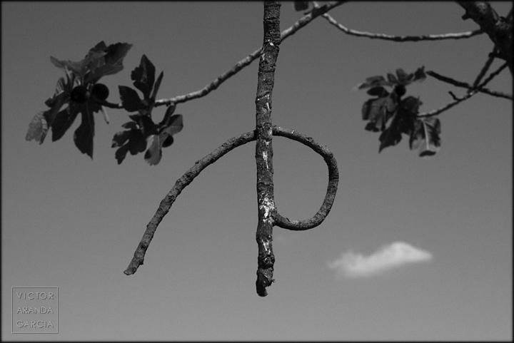 p,fotografia,limites,serie,arte,higuera,rama