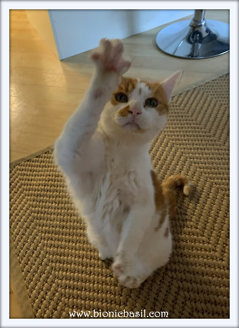 Feline Fiction on Fridays #132 ©BionicBasil® High Five