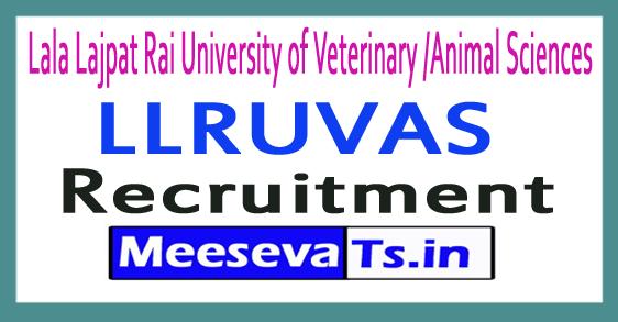 Lala Lajpat Rai University of Veterinary /Animal Sciences LLRUVAS Recruitment Notification 2017