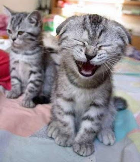 dua anak kucing comel