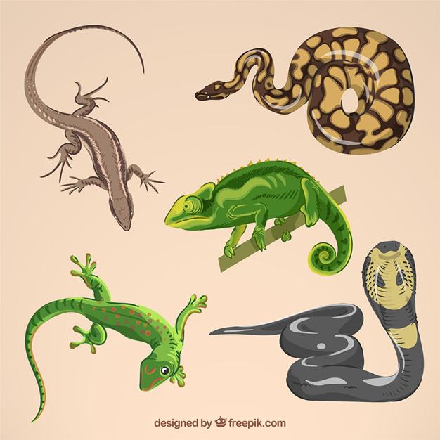 Pengertian, Perkembangbiakan, dan Jenis-Jenis Binatang Reptil di Indonesia