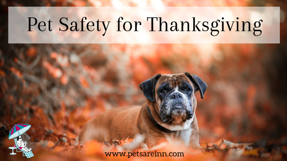 pet safety thanksgiving