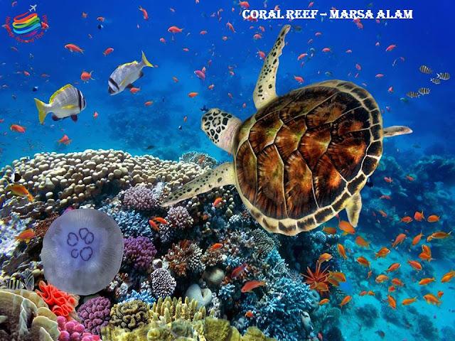 Coral Reef - Marsa Alam