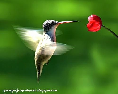 porque soñamos con aves - que significa soñar con ave