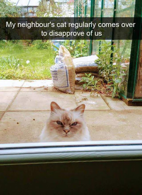 My neighbour's cat regularly comes over to disapprove of us