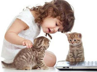 Cara Merawat Kucing Bagi Pemula
