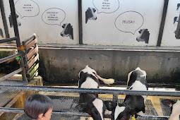 Berpetualang Ke Mini Zoo Farm House Lembang Bandung