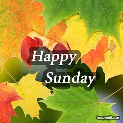 happy sunday images fowers