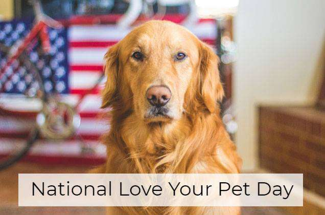 National Love Your Pet Day Wishes Unique Image
