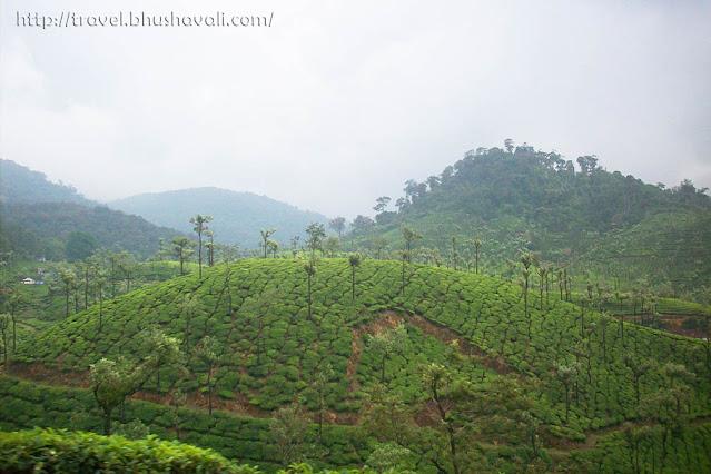 Tea Plantations Valparai, Vazhachal Forest