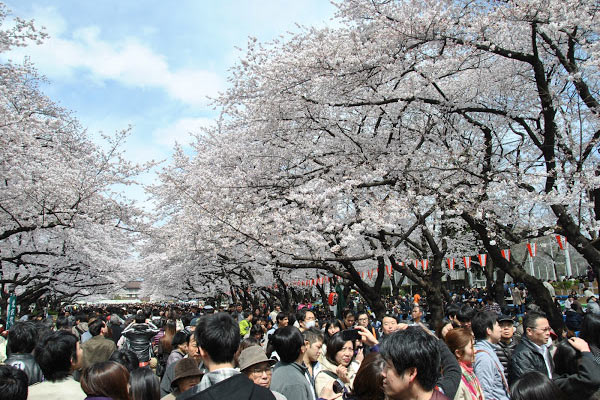 5 great views of Japanese cherry blossoms in Tokyo