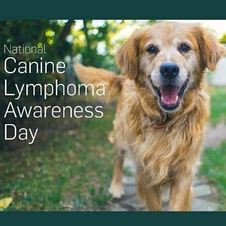 National Canine Lymphoma Awareness Day Wishes Images download