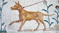 O registro arqueológico está cheio de cocô de cachorro