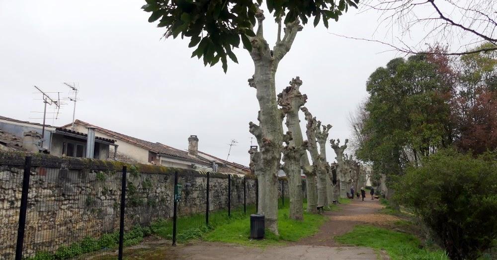 Jardin des remparts le jardin secret de bordeaux le bordeaux invisible - Jardin paysager prix bordeaux ...