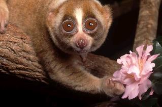 cute animals but dangerous