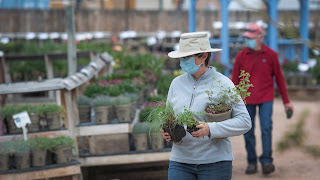 Shoppers at Fort Collins Nursery (photo courtesy of the Coloradoan)