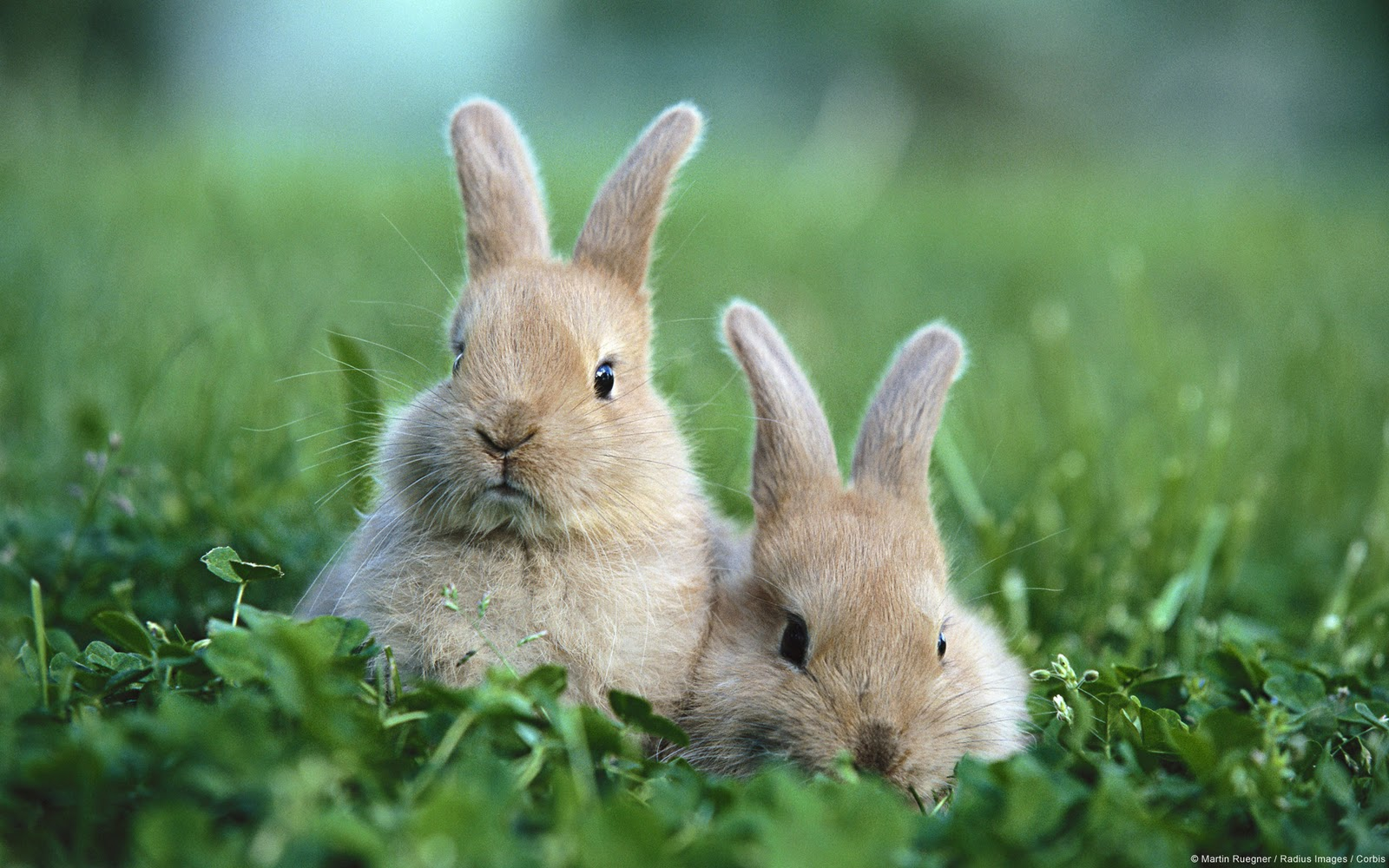 Cute Rabbits In Photos Funny And Cute Animals