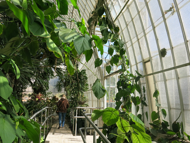 Jard n bot nico de valencia espa a paisaje libre for Jardin botanico en sevilla