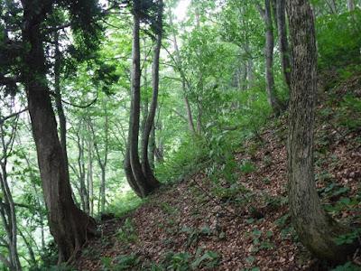 林道から沢に下る斜面