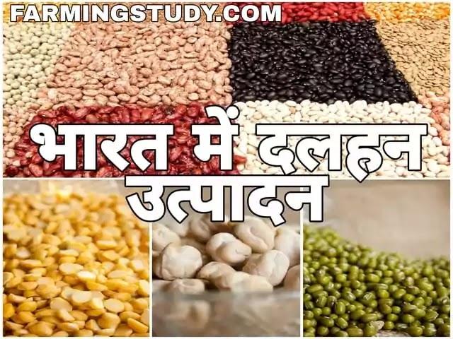 भारत में दलहनी फसलों का उत्पादन कम क्यों है इसे बढ़ाने के क्या उपाय है?, भारत में दलहन उत्पादन, dalhan production in india, दलहनी फसलों की खेती, kheti