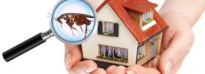 شركة مكافحة حشرات بالطائف والقضاء على النمل الابيض والبق والصراصير في الحال