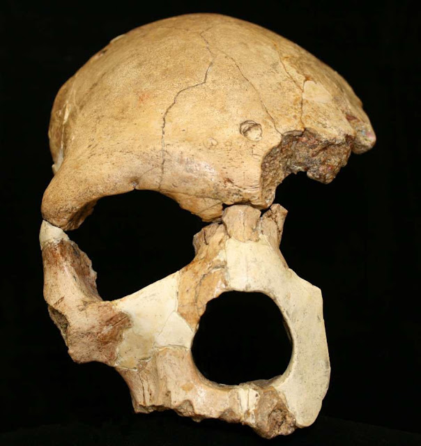 Modern humans emerged more than 300,000 years ago new study suggests